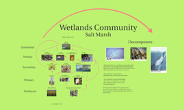 Wetlands Biome