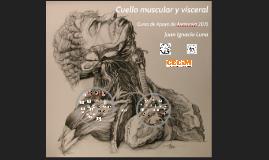 Cuello muscular y visceral