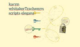 kacyn whitakerTrachemys scripta elegans