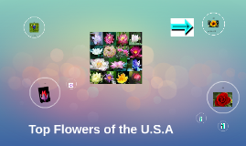 Top Flowers of the U.S.A