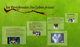 los Vertebrados (los Lobos grises)
