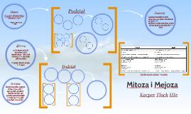 Mitoza i Mejoza