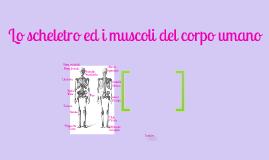 lo scheletro ed i muscoli del corpo umano