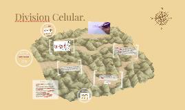 Division Celular.