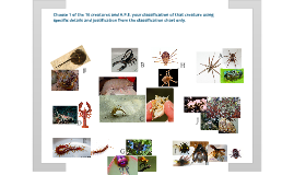 Copy of Arthropod Assignment