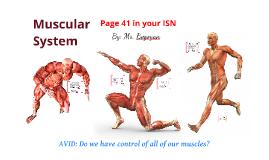 Muscular System - 7th Grade