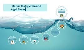 Marine Biology Harmful Algal Bloom