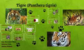 Tigre (Panthera tigris)