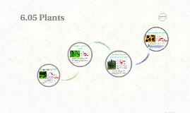 6.05 Plants