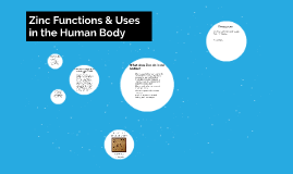 Zinc Functions & Uses in the Human