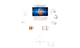 The Cardiovascular System - Heart Physiology - part 2