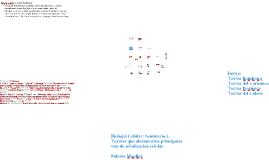 Copy of Copy of Biologia Celular