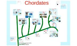 Copy of AP Bio-Biodiversity:  The Chordates