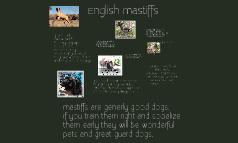 English mastiffs