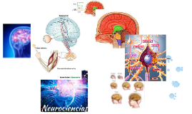 Copia de Copy of Neurociencias Aplicadas a la Educacion