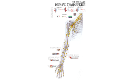 MACKINNON - 2016 CRN - Nerve Transfers for the Hand - Part 4 - Sensory Nerve Transfers