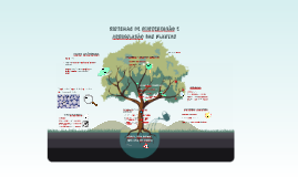 Sistemas de Sustentação e Assimilação das Plantas