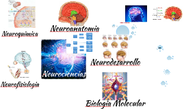 Copy of Neurociencias Aplicadas a la Educacion