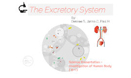 The Excretory System_Gr.8 Science Presentation