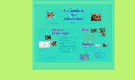 Anacondas & Boa Constrictors