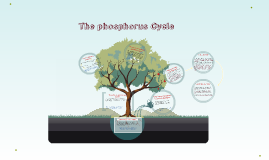Copy of The phosphorus Cycle