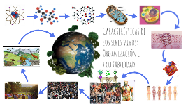 Características de los seres vivos: Organización e irritabil
