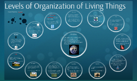 Organiztion of Living Things