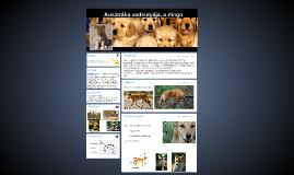http://www.fokusz.info/Image/78._szam/dingo1.jpg