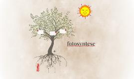 fotosyntese