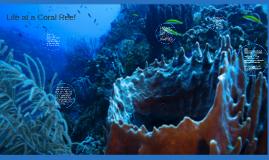 Life at a Coral Reef