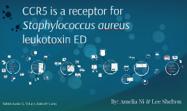 CCR5 is a receptor for Staphylococucus aureus leukotoxin ED