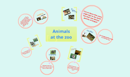Copy of Animals at the zoo