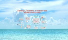 Copy of SISTEMA ARTERIAL Y VENOSO DEL MIEMBRO SUPERIOR