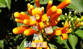 Copy of Hidrolatos