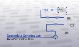 drosophila genetics lab by darsh patel on prezi