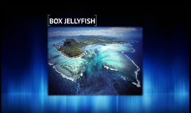 BOX JELLYFISH