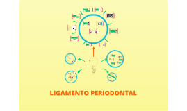 Copy of Copy of Ligamento Periodontal