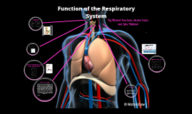 BTEC Sport Structure and Function of the Respiratory System
