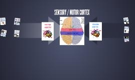 SENSORY/MOTOR CORTEX