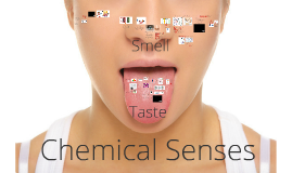 Lecture 13: Chemical senses