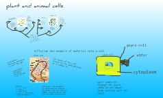 Copy of plant and animal cells