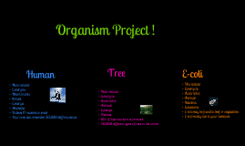 Organism Project !