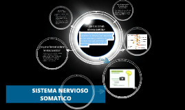 Copy of       SISTEMA NERVIOSO SOMATICO