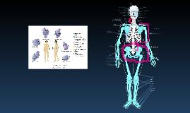 the skeleton prezi