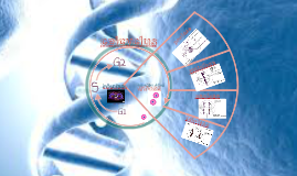 Copy of celcyclus
