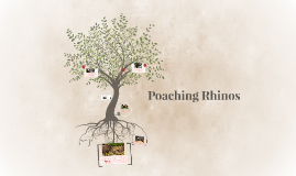 Copy of Copy of Rhino poaching in Africa