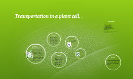 Transportation in a plant cell.