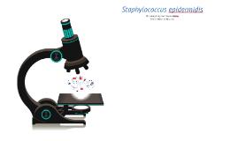 Copy of Meet the Microbe - Staphylococcus epidermidis