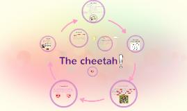 Life Cycle Of A Cheetah