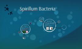 Spirillum Bacteria